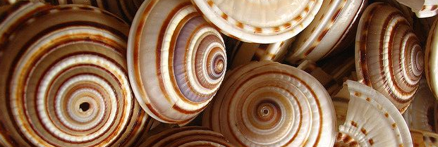 20 Facts about Money: Sea Shells